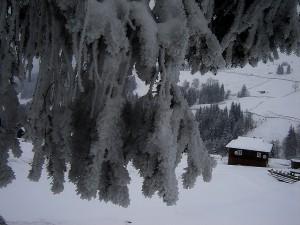 ветка мороз домик1