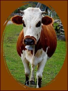 корова в кружке