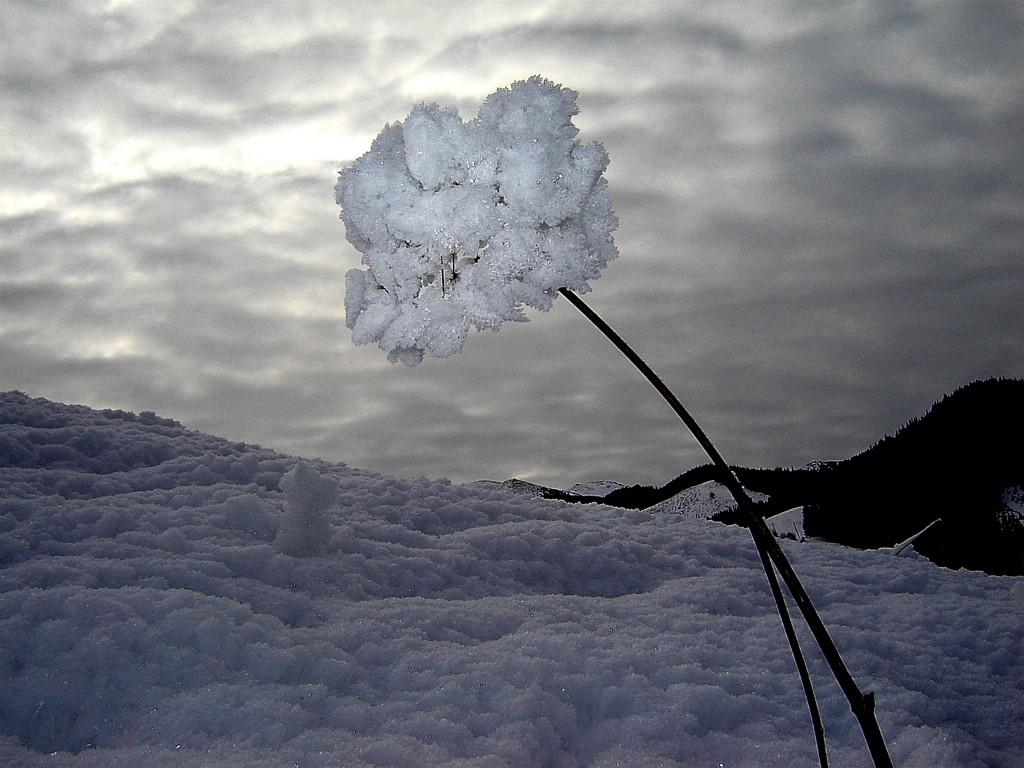 цветокJPG